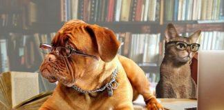 Год желтой собаки