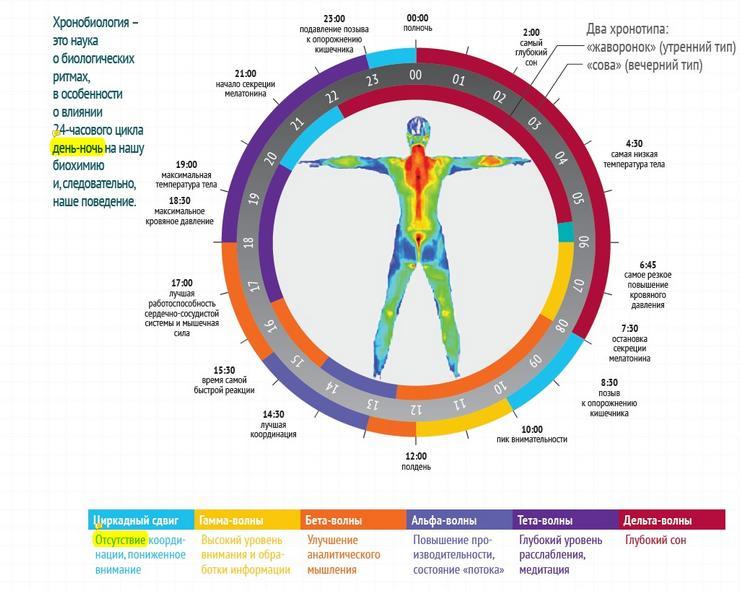 Правильные биоритмы человека