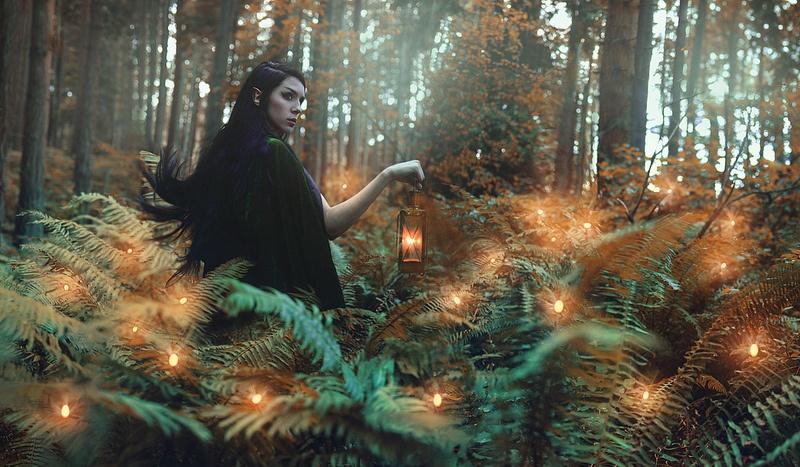 магические растения папоротник