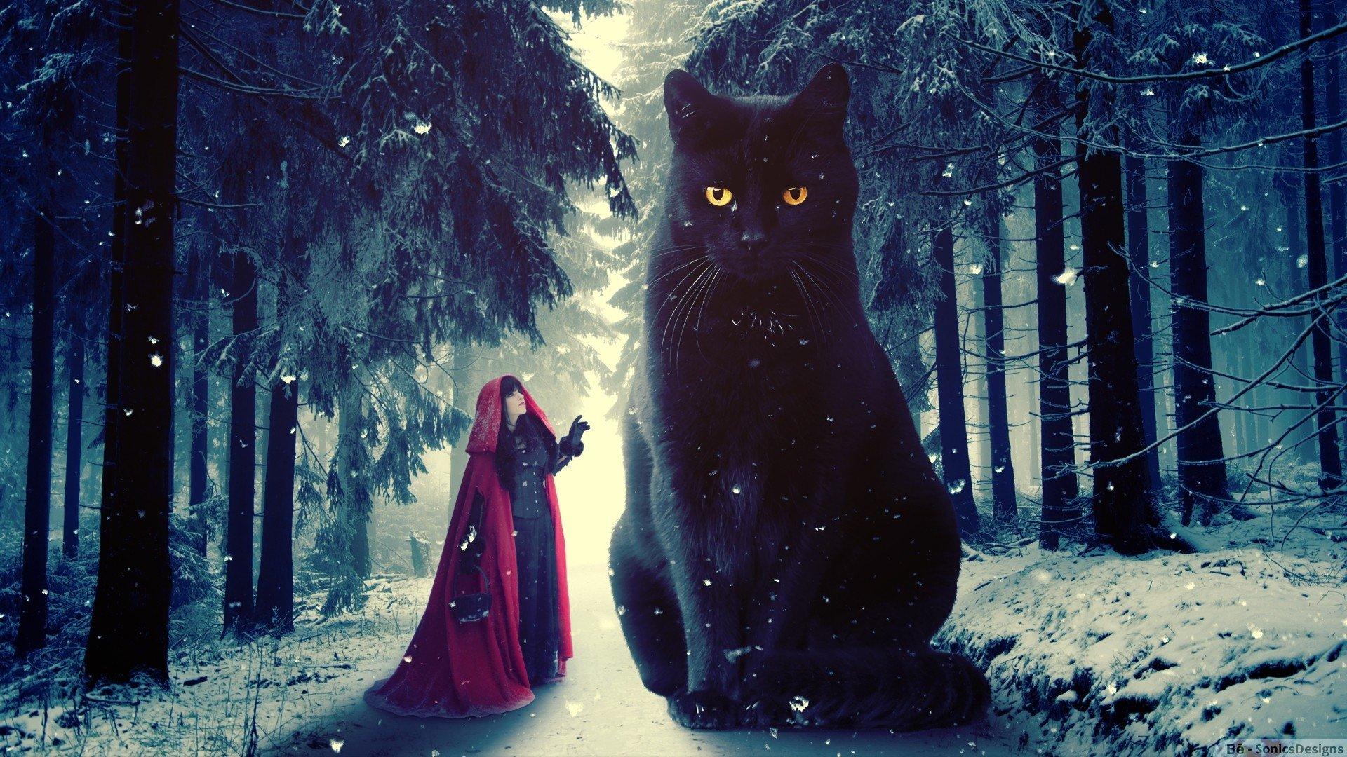 черная кошка приметы
