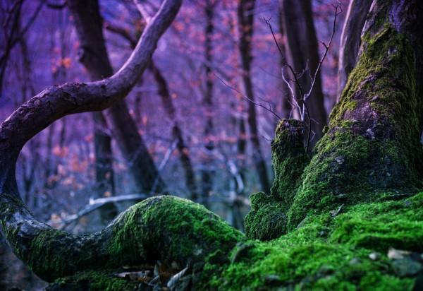 магическая сила деревьев и растений