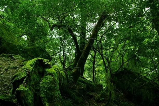 волшебные свойства деревьев и растений